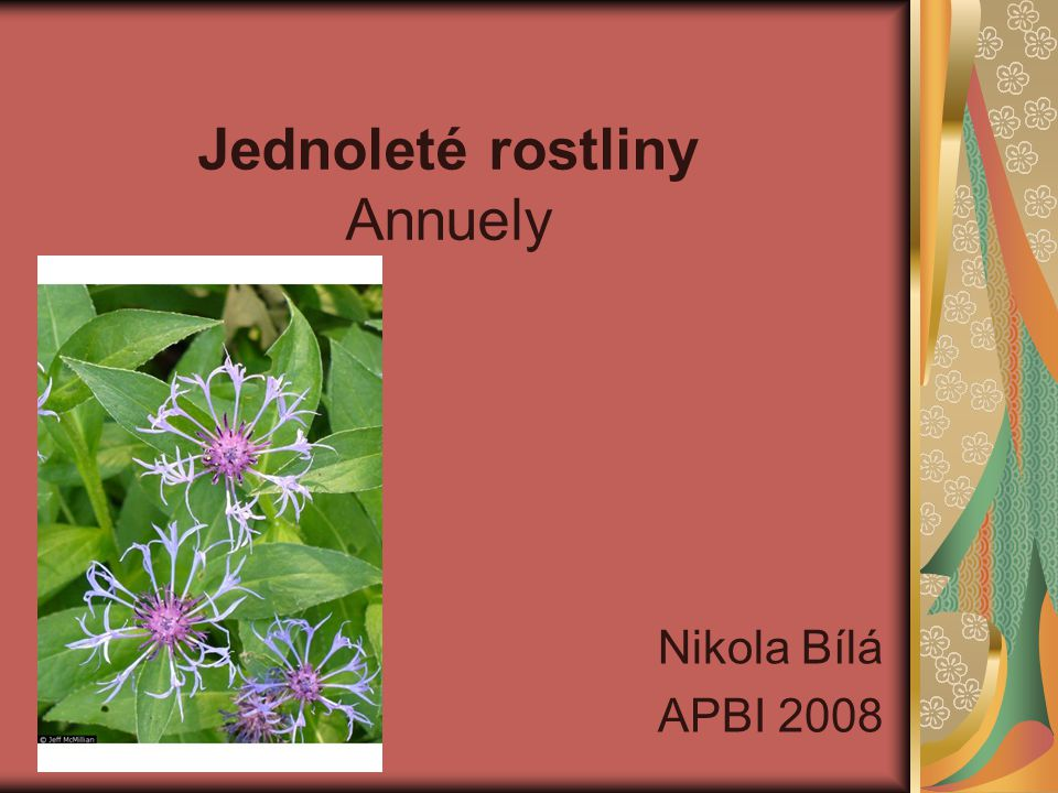 Jednoleté rostliny Annuely