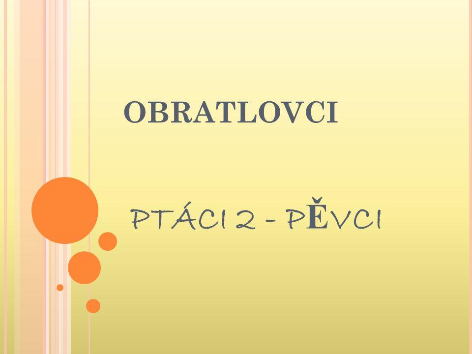 OBRATLOVCI PTÁCI 2 - PĚVCI