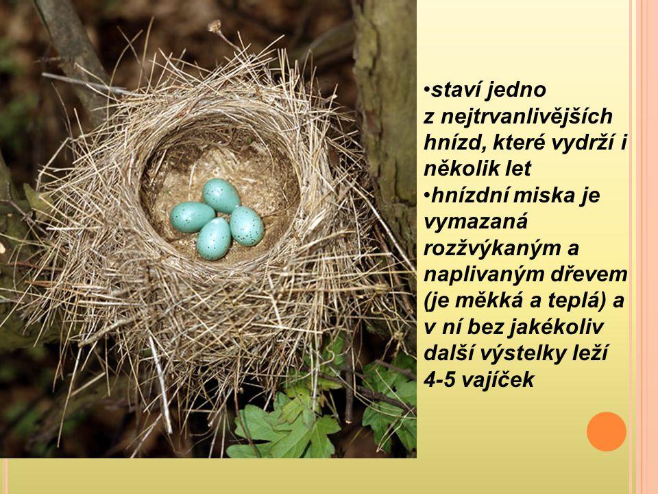 staví jedno z nejtrvanlivějších hnízd, které vydrží i několik let
