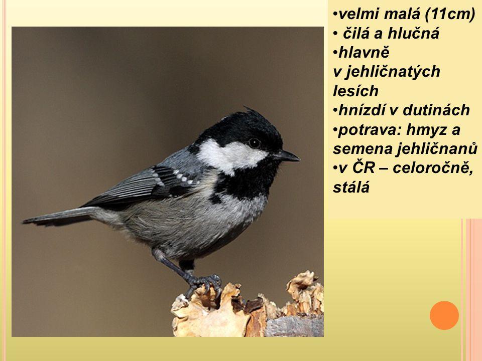 velmi malá (11cm) čilá a hlučná. hlavně v jehličnatých lesích. hnízdí v dutinách. potrava: hmyz a semena jehličnanů.
