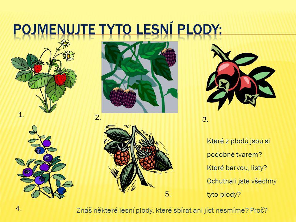 Pojmenujte tyto lesní plody: