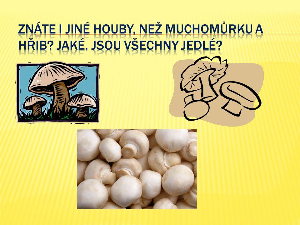 Znáte i jiné houby, než muchomůrku a hřib Jaké. Jsou všechny jedlé