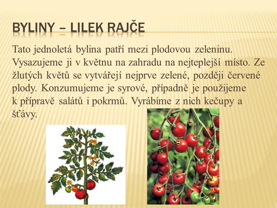 byliny – lilek rajče