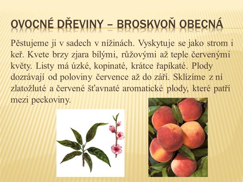 Ovocné dřeviny – broskvoň obecná
