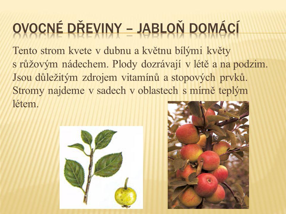 Ovocné dřeviny – jabloň domácí