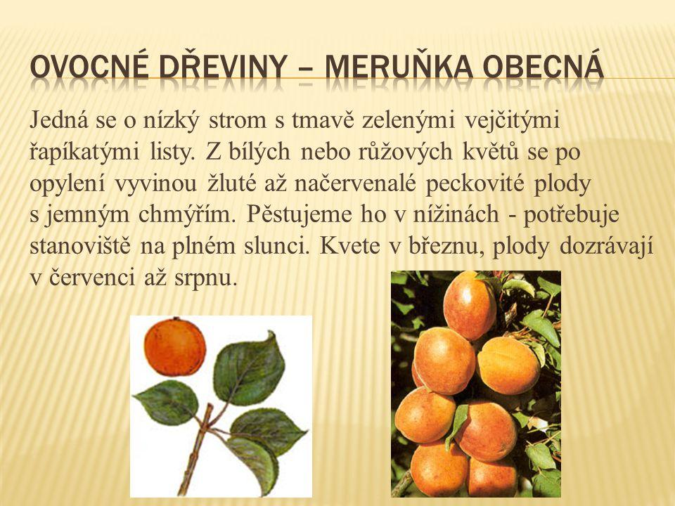 Ovocné dřeviny – meruňka obecná