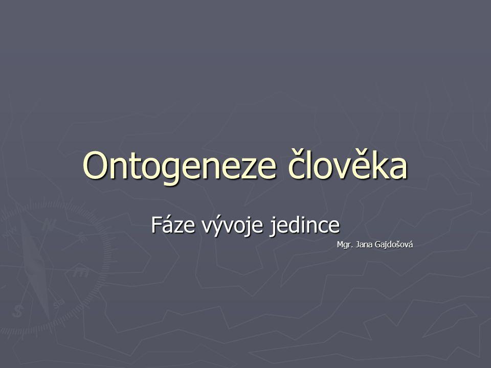 Fáze vývoje jedince Mgr. Jana Gajdošová