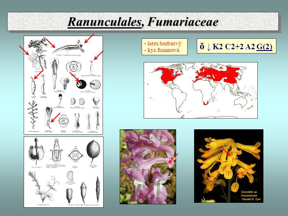 Ranunculales, Fumariaceae