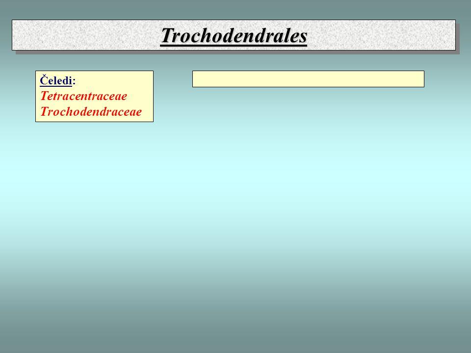 Trochodendrales Čeledi: Tetracentraceae Trochodendraceae