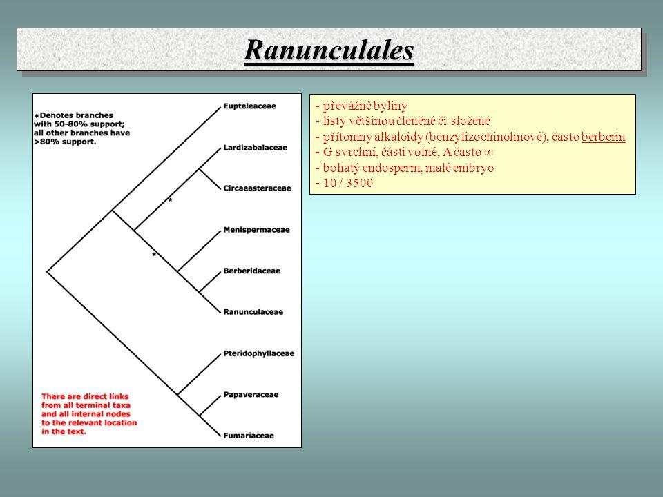 Ranunculales - převážně byliny - listy většinou členěné či složené