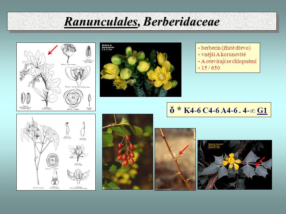 Ranunculales, Berberidaceae