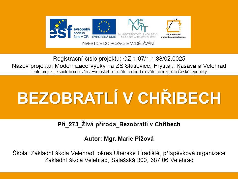 Pří_273_Živá příroda_Bezobratlí v Chřibech Autor: Mgr. Marie Pížová