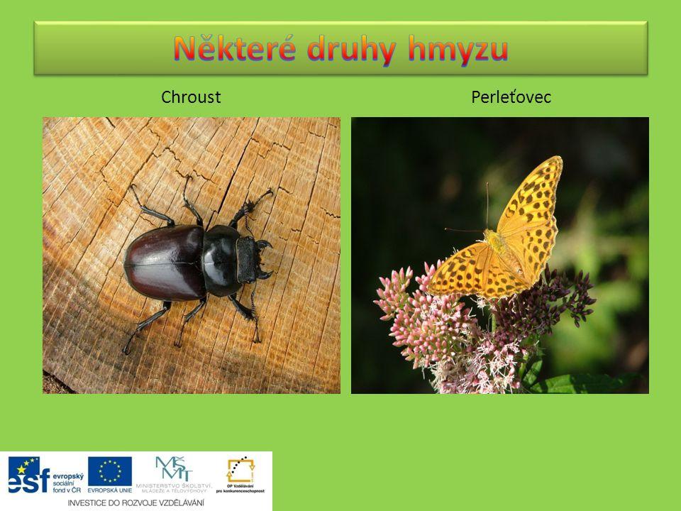 Některé druhy hmyzu Chroust Perleťovec