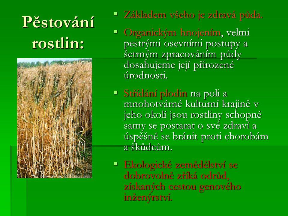 Pěstování rostlin: Základem všeho je zdravá půda.