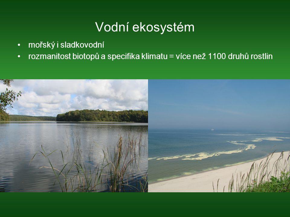 Vodní ekosystém mořský i sladkovodní