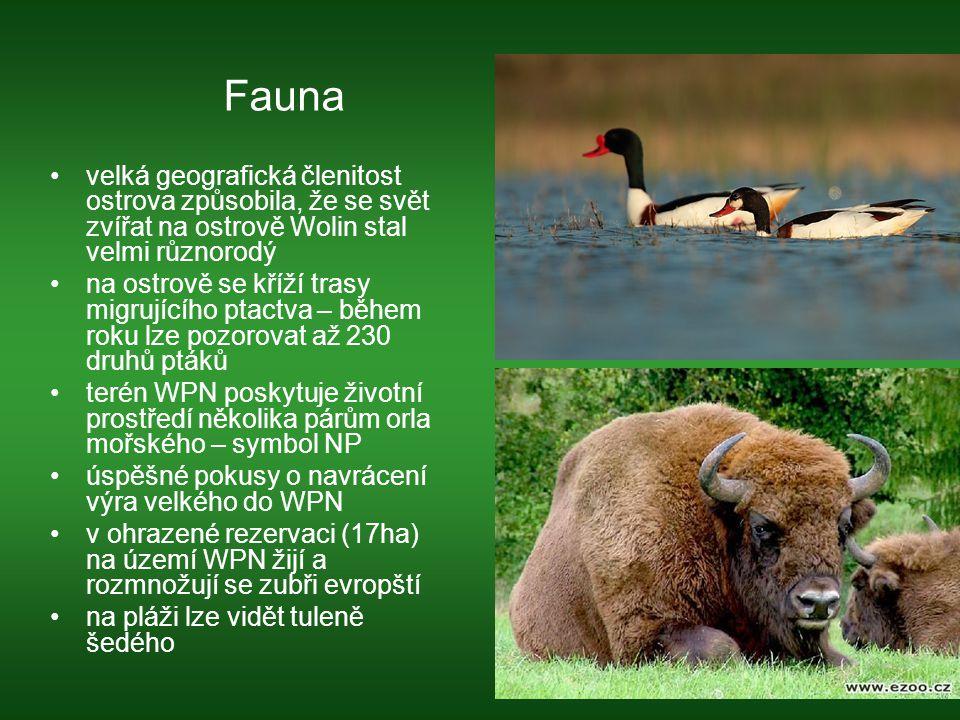 Fauna velká geografická členitost ostrova způsobila, že se svět zvířat na ostrově Wolin stal velmi různorodý.