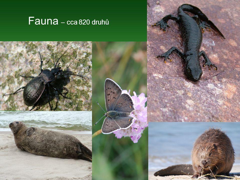 Fauna – cca 820 druhů