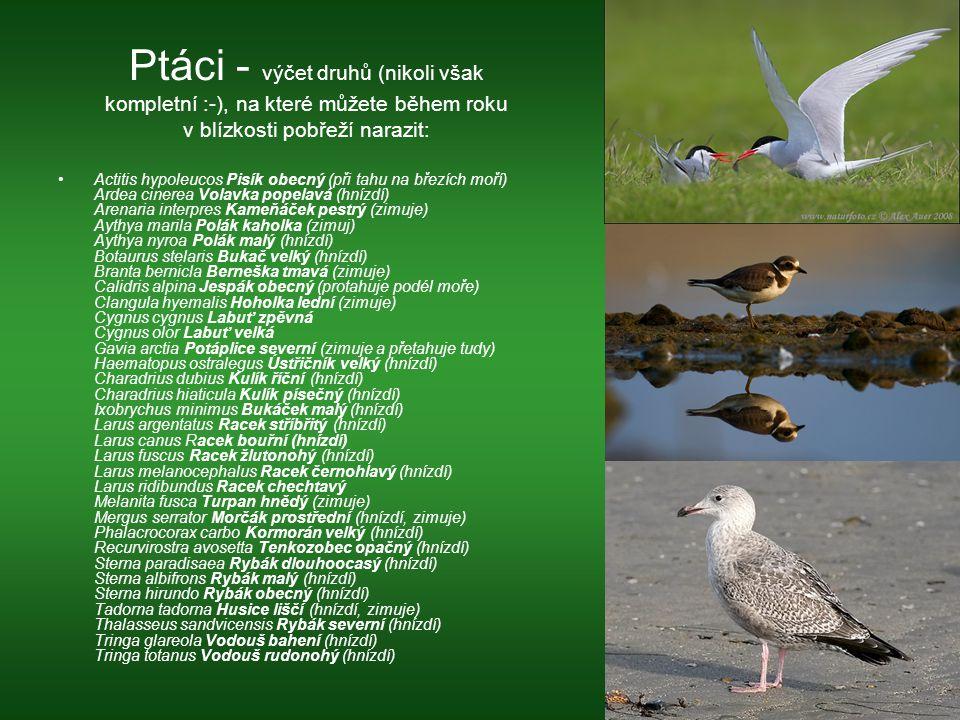 Ptáci - výčet druhů (nikoli však kompletní :-), na které můžete během roku v blízkosti pobřeží narazit: