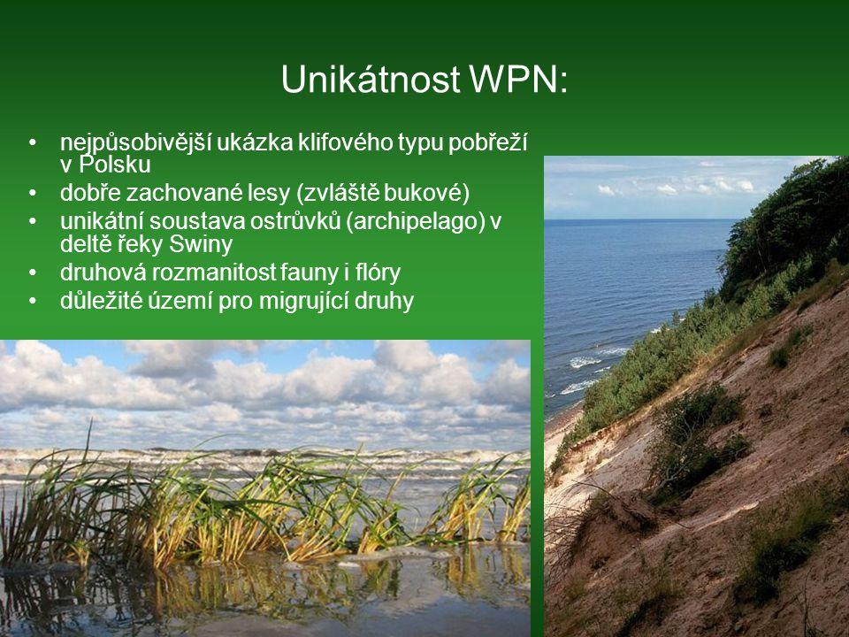 Unikátnost WPN: nejpůsobivější ukázka klifového typu pobřeží v Polsku