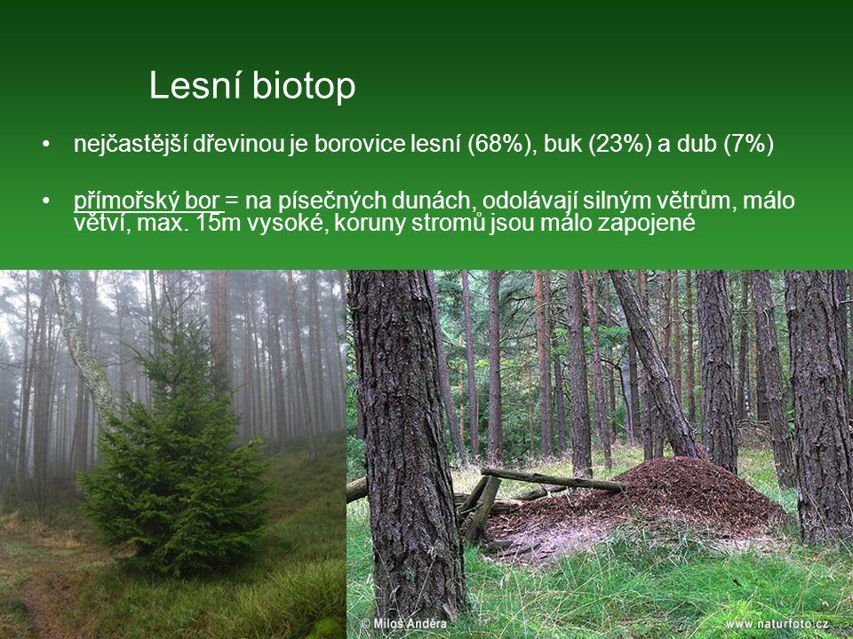 Lesní biotop nejčastější dřevinou je borovice lesní (68%), buk (23%) a dub (7%)