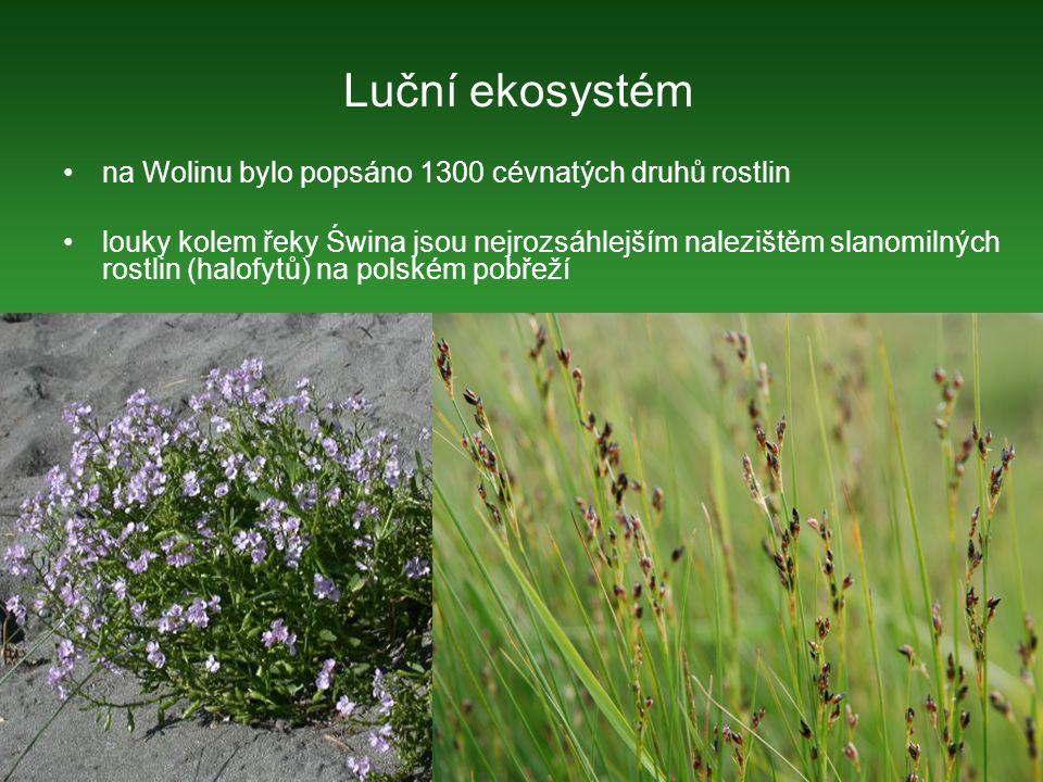 Luční ekosystém na Wolinu bylo popsáno 1300 cévnatých druhů rostlin