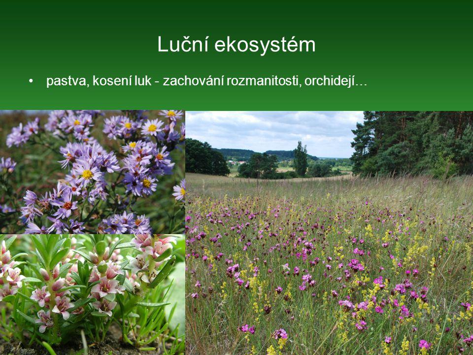 Luční ekosystém pastva, kosení luk - zachování rozmanitosti, orchidejí…