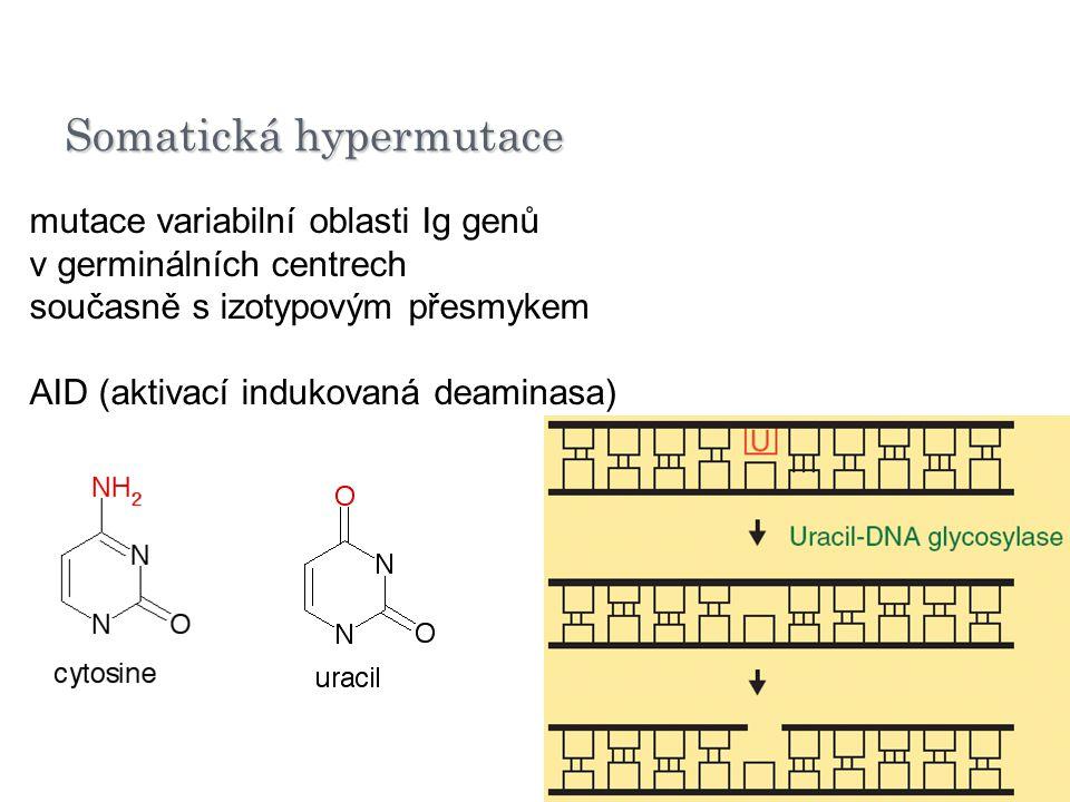 Somatická hypermutace