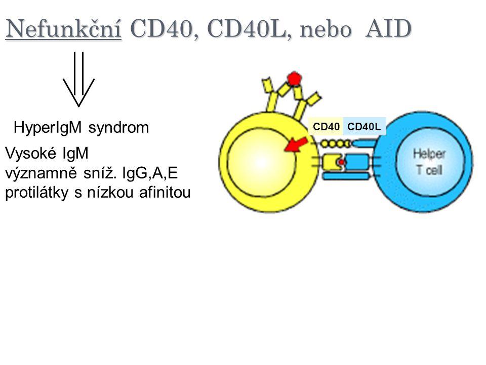 Nefunkční CD40, CD40L, nebo AID