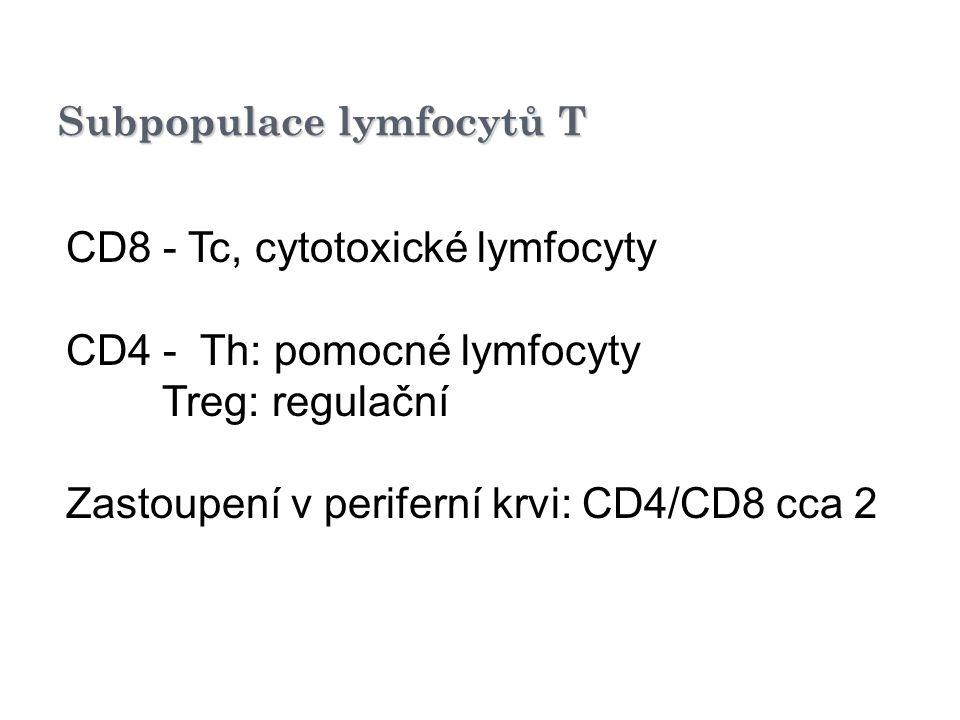 Subpopulace lymfocytů T