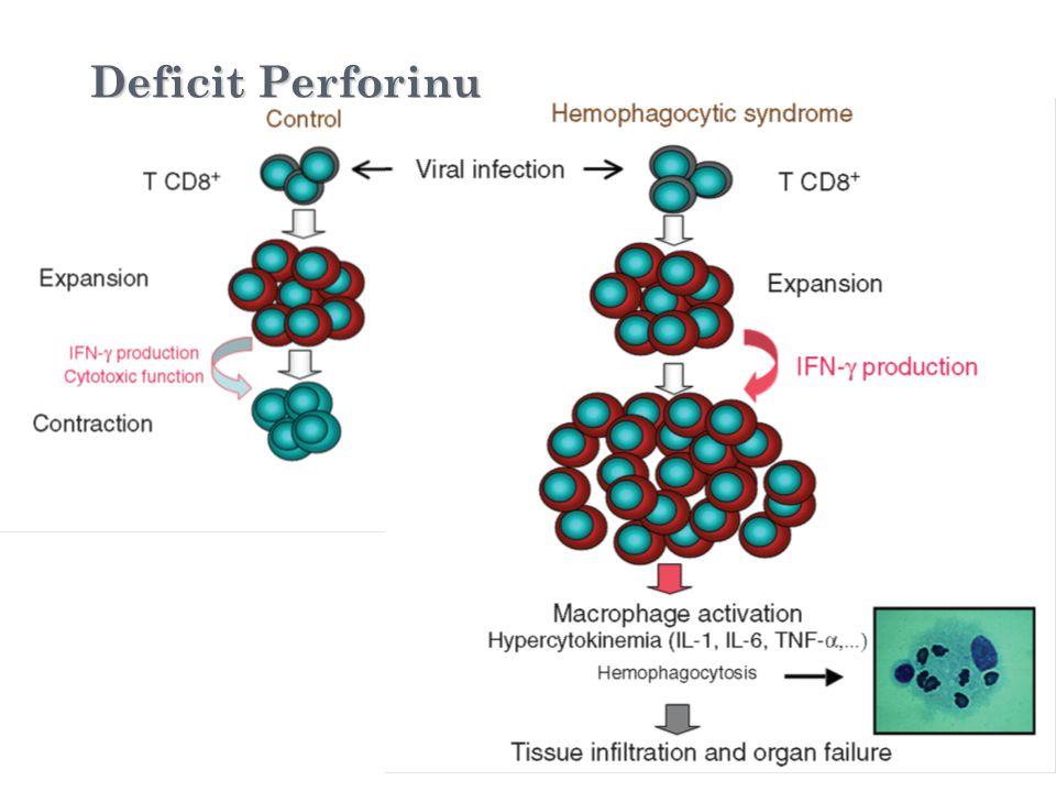 Deficit Perforinu Viral infection