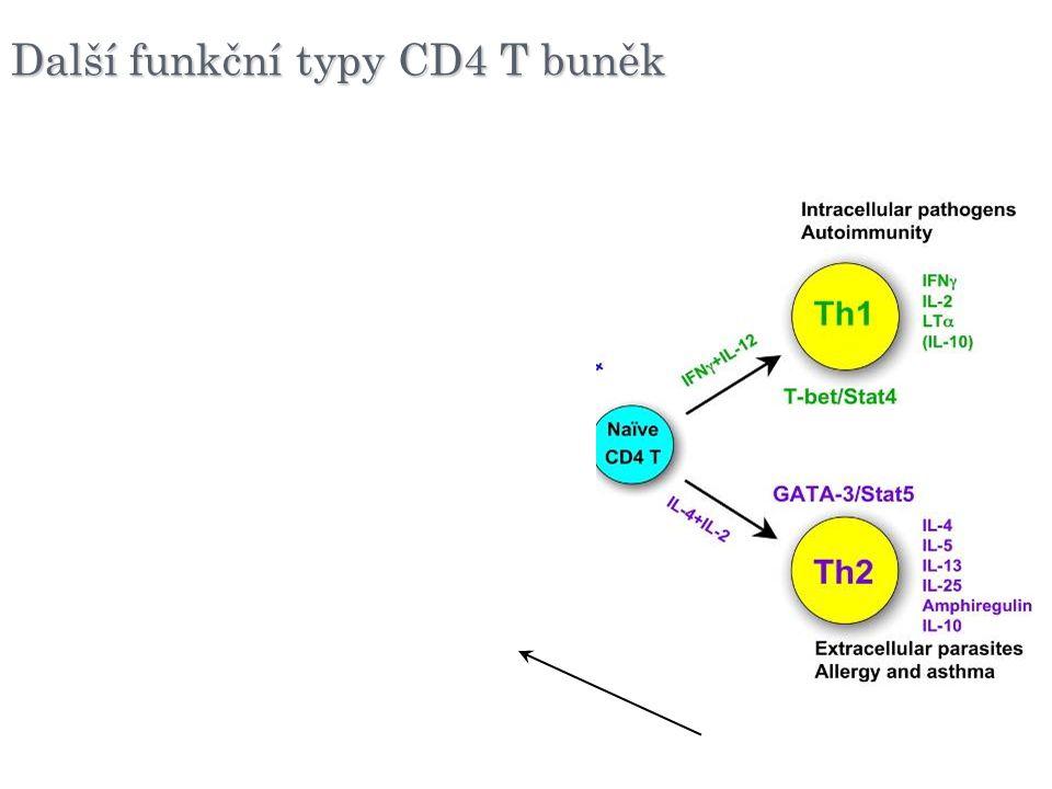 Další funkční typy CD4 T buněk