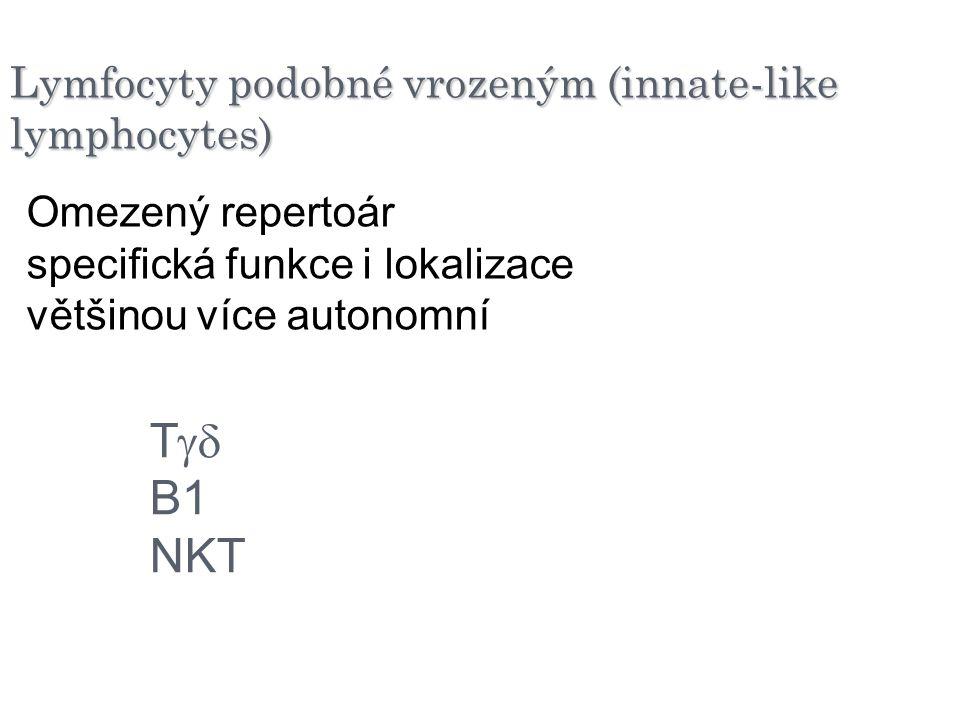 Lymfocyty podobné vrozeným (innate-like lymphocytes)