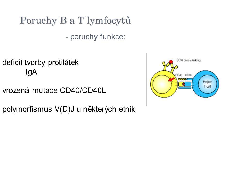 Poruchy B a T lymfocytů - poruchy funkce: deficit tvorby protilátek