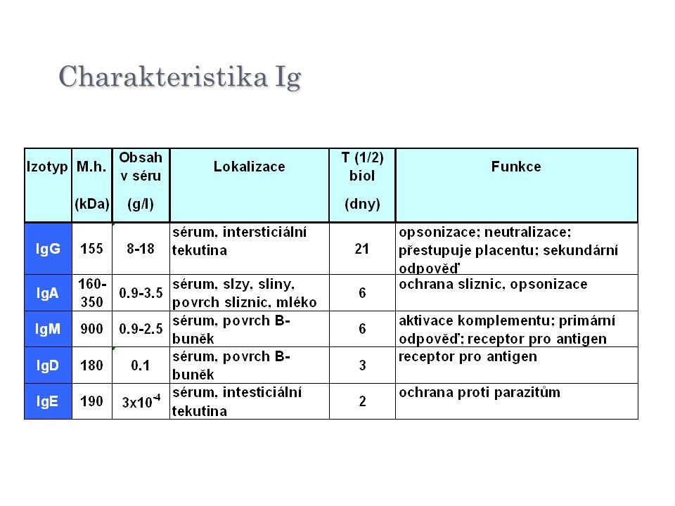 Charakteristika Ig ¾: IgG po 1/6: IgA, IgM pod 1%: IgD minimum: IgE