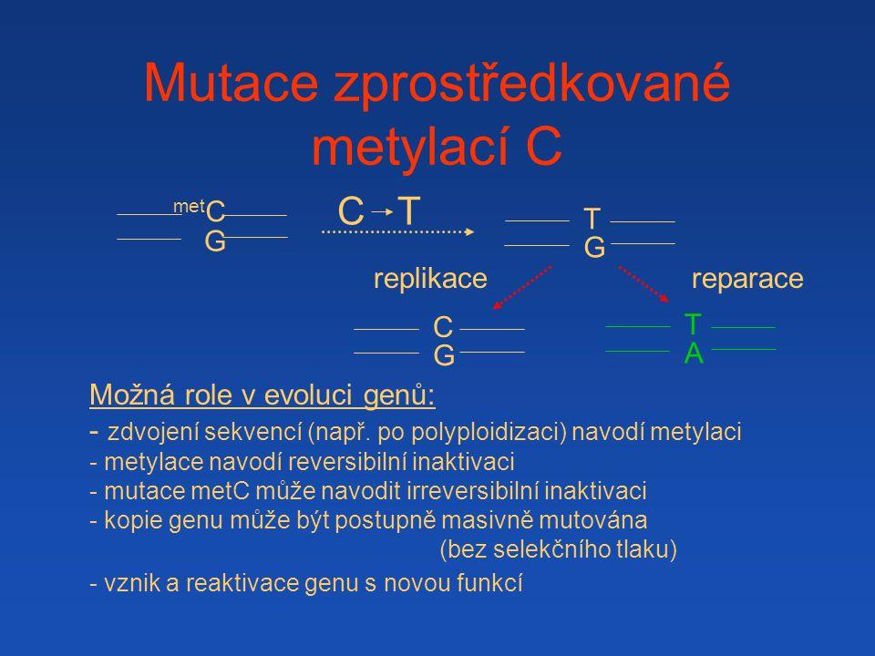 Mutace zprostředkované metylací C