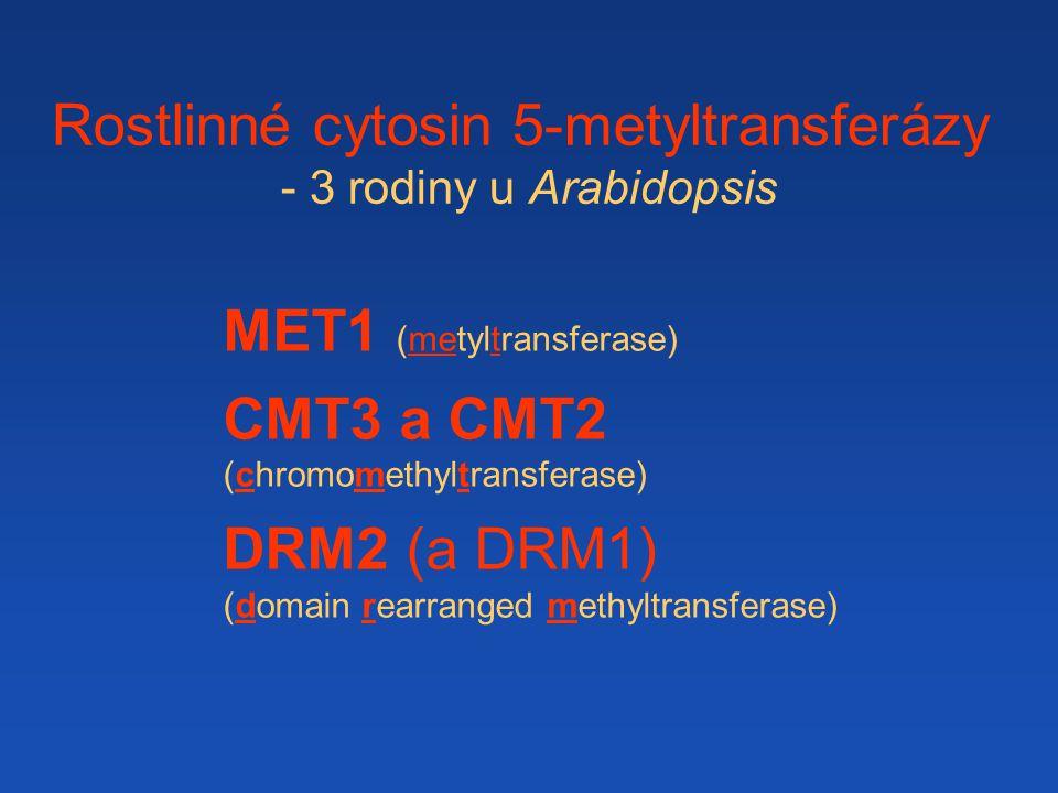 Rostlinné cytosin 5-metyltransferázy