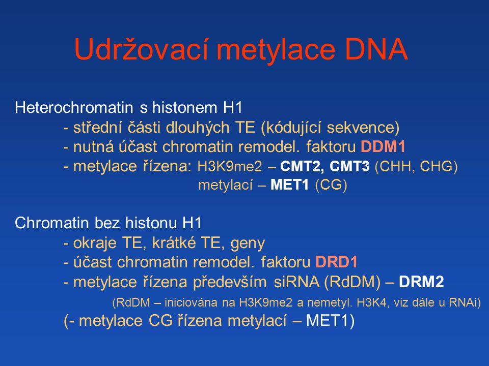 Udržovací metylace DNA