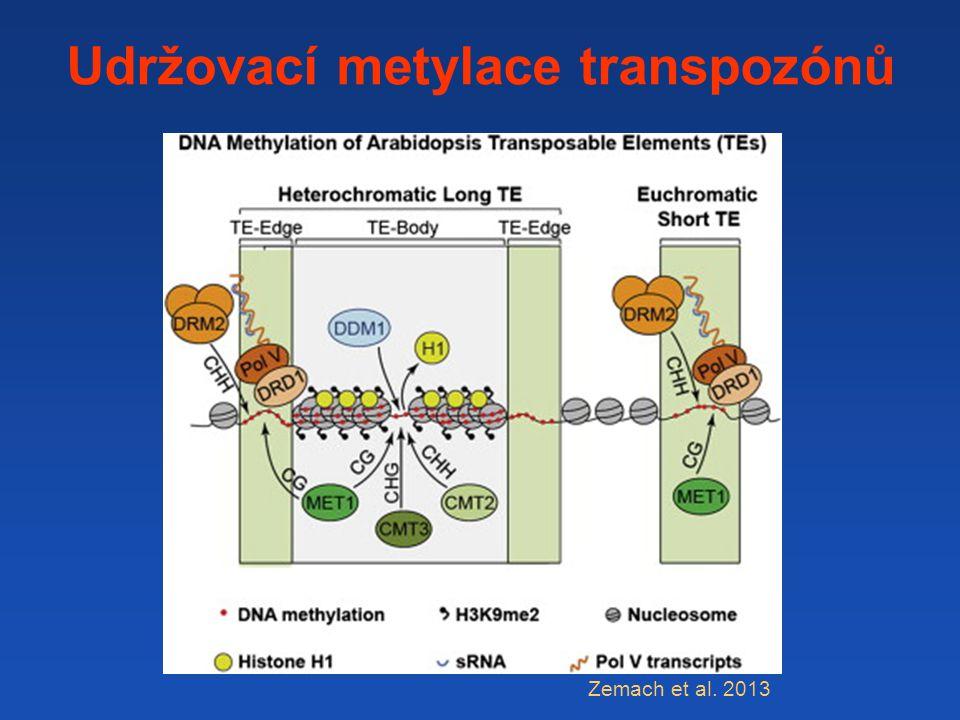Udržovací metylace transpozónů