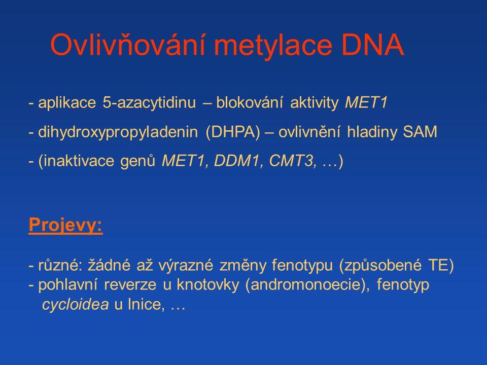 Ovlivňování metylace DNA