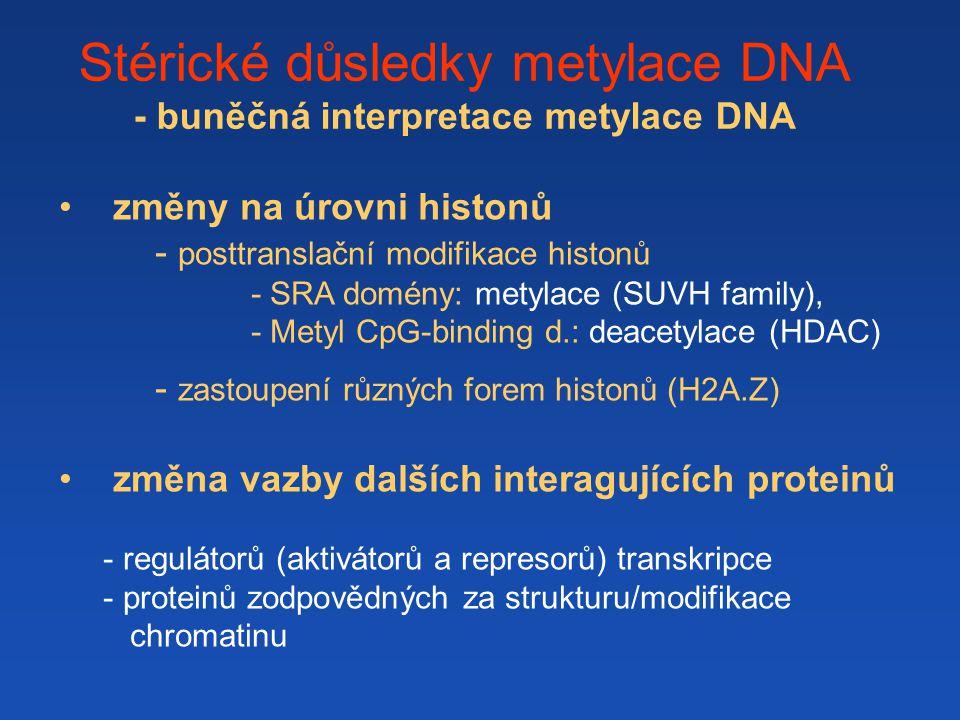 Stérické důsledky metylace DNA - buněčná interpretace metylace DNA