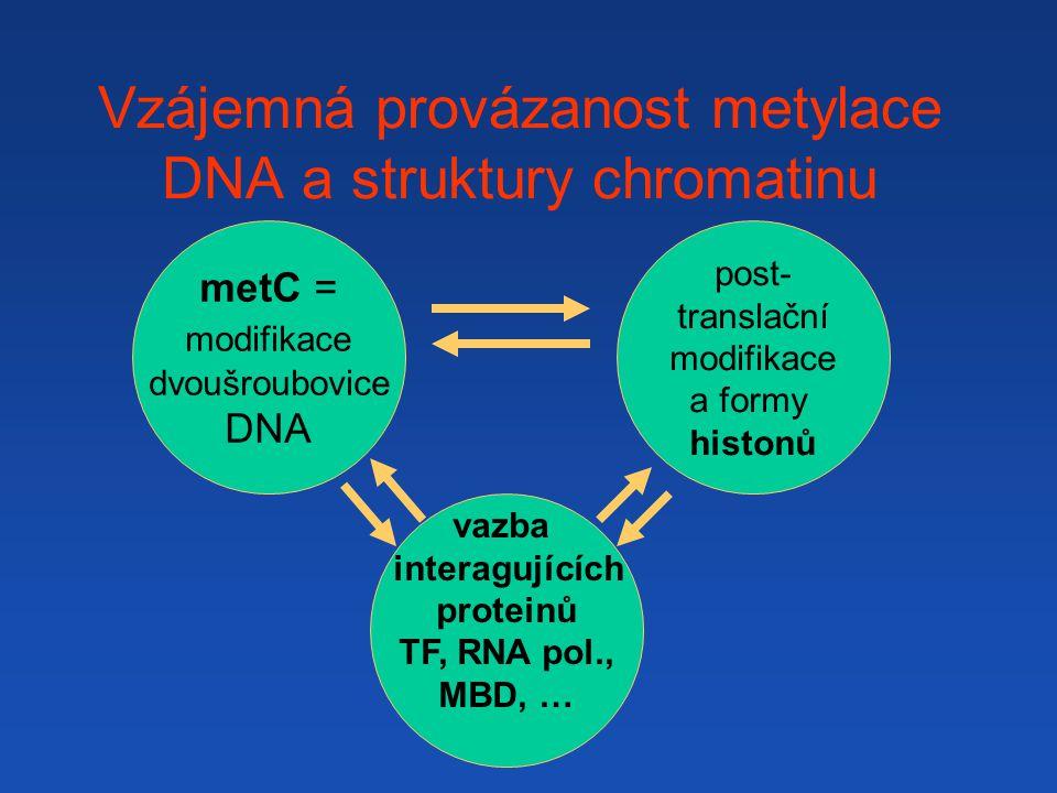 Vzájemná provázanost metylace DNA a struktury chromatinu