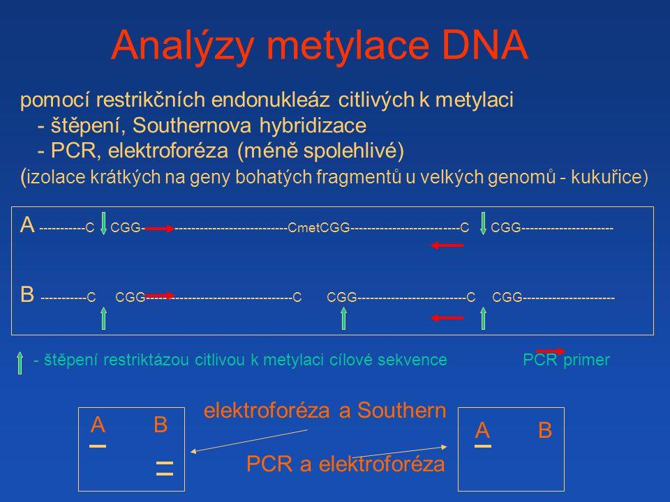 Analýzy metylace DNA pomocí restrikčních endonukleáz citlivých k metylaci. - štěpení, Southernova hybridizace.