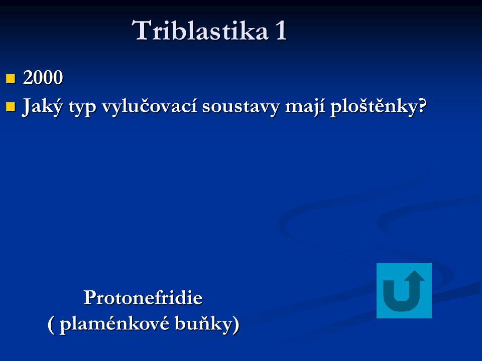 Protonefridie ( plaménkové buňky)