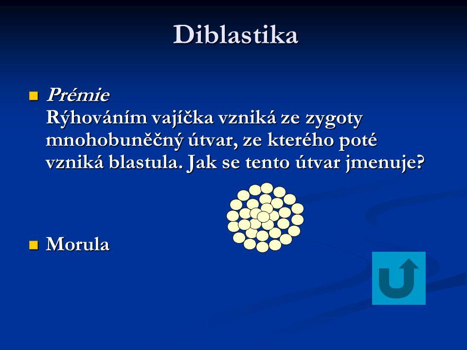 Diblastika Prémie Rýhováním vajíčka vzniká ze zygoty mnohobuněčný útvar, ze kterého poté vzniká blastula. Jak se tento útvar jmenuje