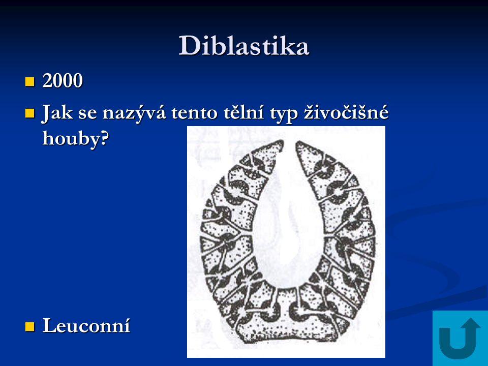 Diblastika 2000 Jak se nazývá tento tělní typ živočišné houby