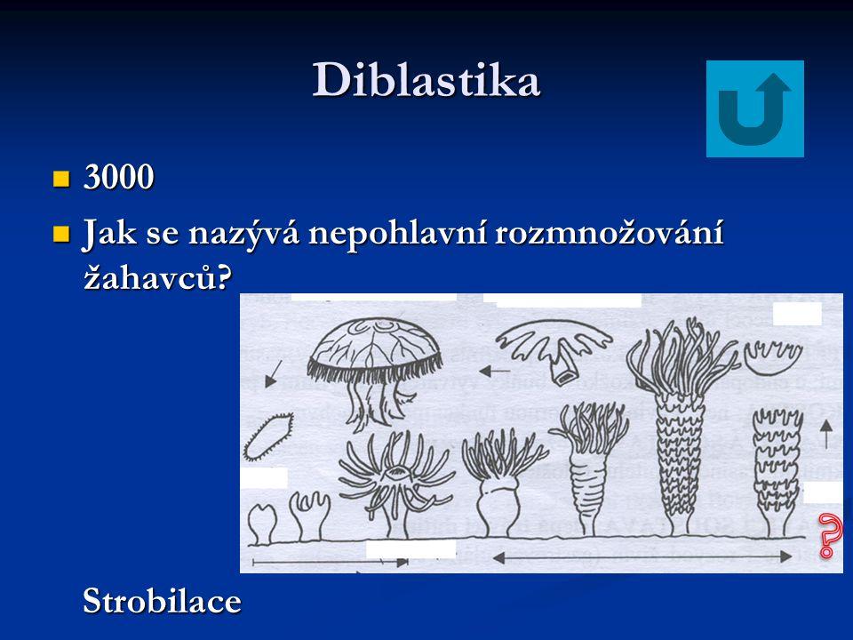 Diblastika 3000 Jak se nazývá nepohlavní rozmnožování žahavců