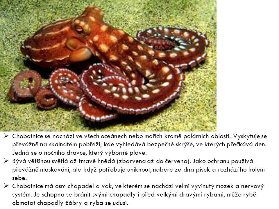 Chobotnice se nachází ve všech oceánech nebo mořích kromě polárních oblastí. Vyskytuje se převážně na skalnatém pobřeží, kde vyhledává bezpečné skrýše, ve kterých přečkává den. Jedná se o nočního dravce, který výborně plave.