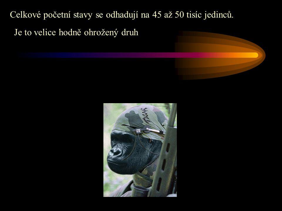 Celkové početní stavy se odhadují na 45 až 50 tisíc jedinců.