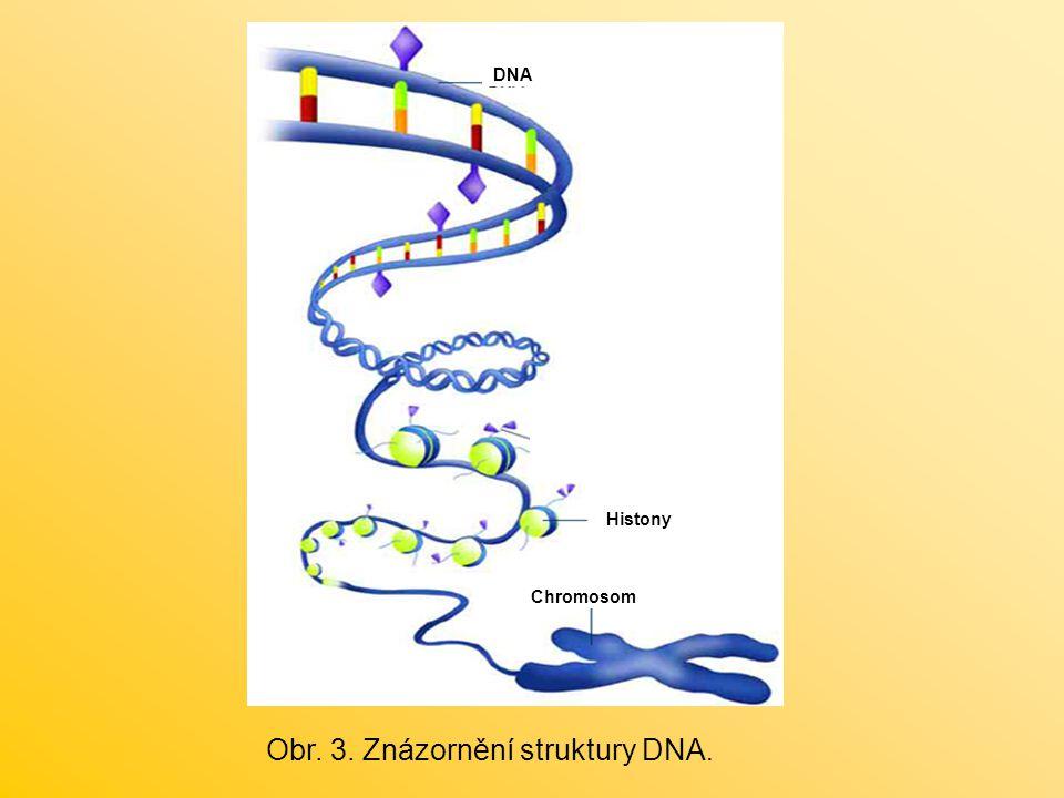 Obr. 3. Znázornění struktury DNA.