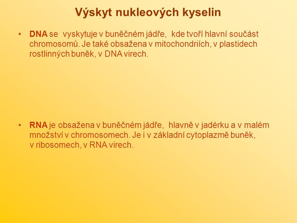 Výskyt nukleových kyselin